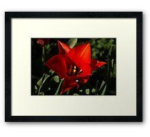 Brilliant Spring Sunshine in Red Framed Print
