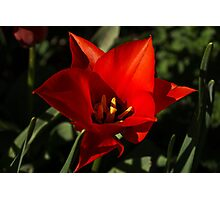 Brilliant Spring Sunshine in Red Photographic Print