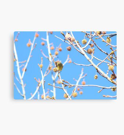 Precious Yellow Finch Canvas Print