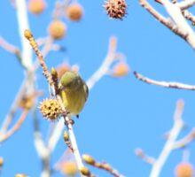 Precious Yellow Finch Sticker