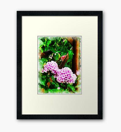 Summer Splendour  Framed Print
