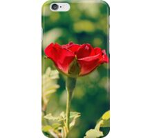 I give to my love one red rose iPhone Case/Skin