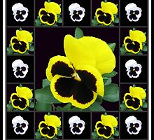 Pretty Pansy Faces Collage by kathrynsgallery