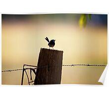 Superb Wren on Fence Post Poster