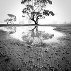 Reflection of a Tree by Blue Chair Gallery