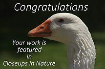 Closeups in Nature Challenge by myraj