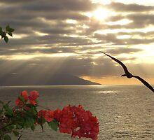 sunset with bougainvilleas and frigate bird - puesta del sol con buganvilla y fragata by Bernhard Matejka