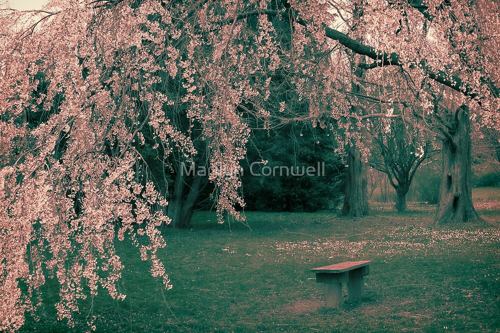 In a Dream It Became Spring by Marilyn Cornwell