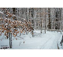Come Walk With Me - Dedicated to Viorica Photographic Print