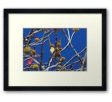 Precious Finch Framed Print