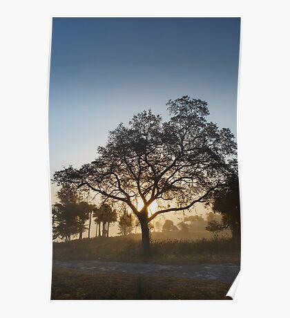 Foggy sun raise… Poster