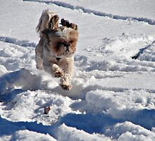 Enjoying the Snow by PicsbyJody