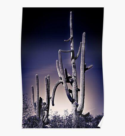 Cactus#31 Poster