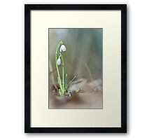Sneaky snowdrops... Framed Print