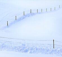 Snow Field by Angelika  Vogel