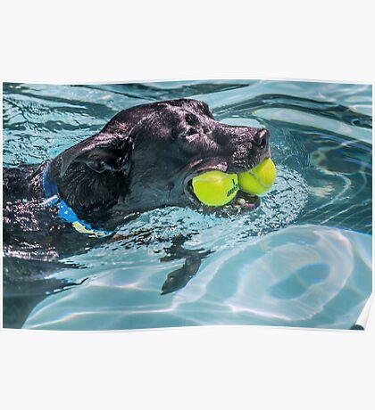 Ball Dog Poster