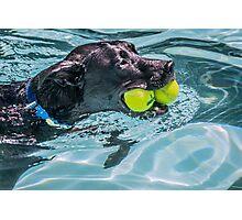 Ball Dog Photographic Print
