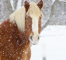 Snowy Day on the Farm by lorilee