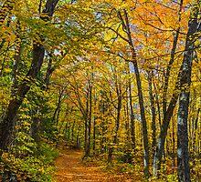Autumn North Wood by Kenneth Keifer