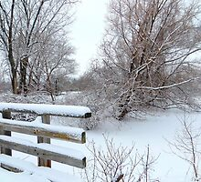 Laden with Snow by Sandra Fortier
