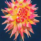 Exploding Lollipop Dahlia by Ken Powers