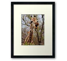 HOW MUCH LONGER MUST I HOLD MY  TUNG !!! -GIRAFFE – Giraffa Camelopardalis (KAMEELPERD) Framed Print