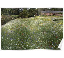 Country Field of Flowers Poster