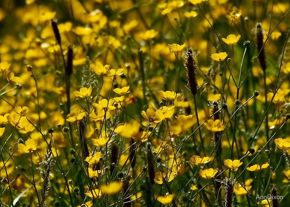 Buttercup Field by AnnDixon