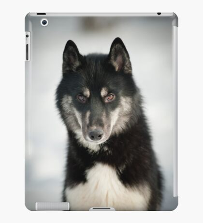 husky portrait iPad Case/Skin