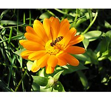 Flower and bee 2 Photographic Print