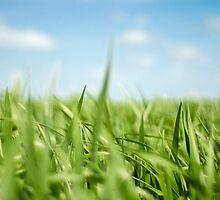 Oaten The Field by Jeff Reynolds Photography