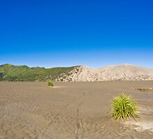 Desert scenery in Bromo by Budiid