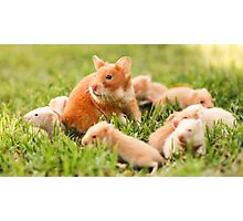 Golden hamster with her young litter on the lawn Photographic Print
