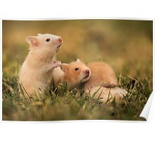 Golden hamster with her young litter on the lawn Poster