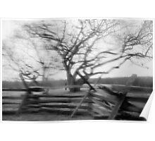 Rainy Black & White Trees Poster