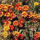 Wild Flowers 2 by zijing