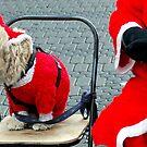 Oh,not again..Jingle bells by Arie Koene