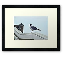 Perched Seagull Framed Print