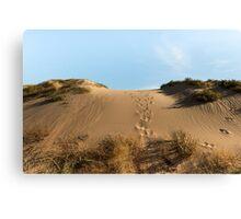 Chasing Kangaroos Canvas Print