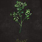 Basil  by randoms