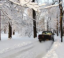 Drive through Winter Wonderland! by Alberto  DeJesus