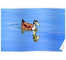 Duck Reflected Poster