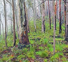 Eucalypts in the Mist by Harry Oldmeadow