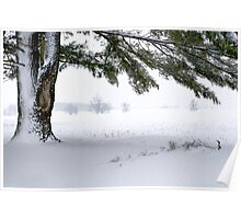 Pine Tree Framing Snow Scene Poster