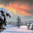Up North by Igor Zenin
