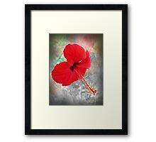 ©GS Red Hibiscus IAB Framed Print