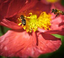 Busy Bees by Lainey Brown