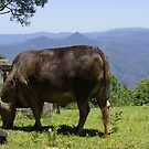 Mountaintop Grazing by Clare Colins