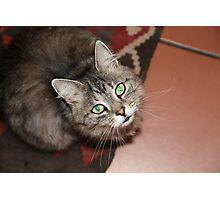 green eyed cat  Photographic Print
