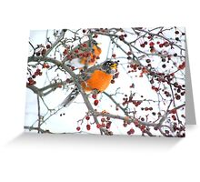 Robin in Winter #4 Greeting Card